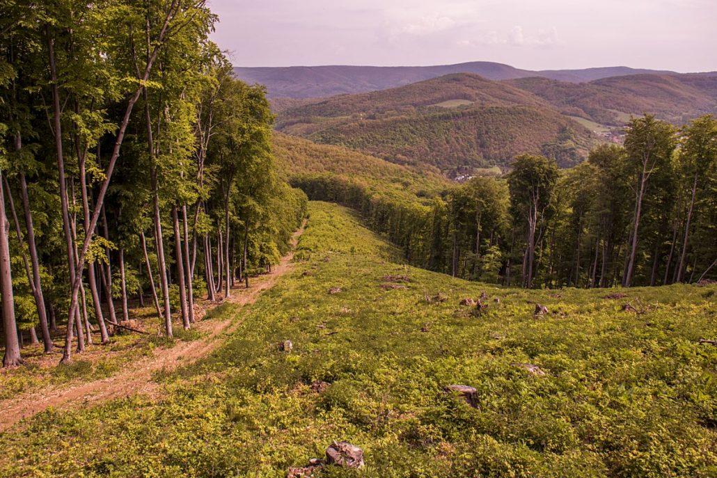 Miután az útvonal jellemzően pontosan a határvonalat követi, néhány szakasza kifejezetten meredek (karancs-medves.info fotó: Micsuda András)