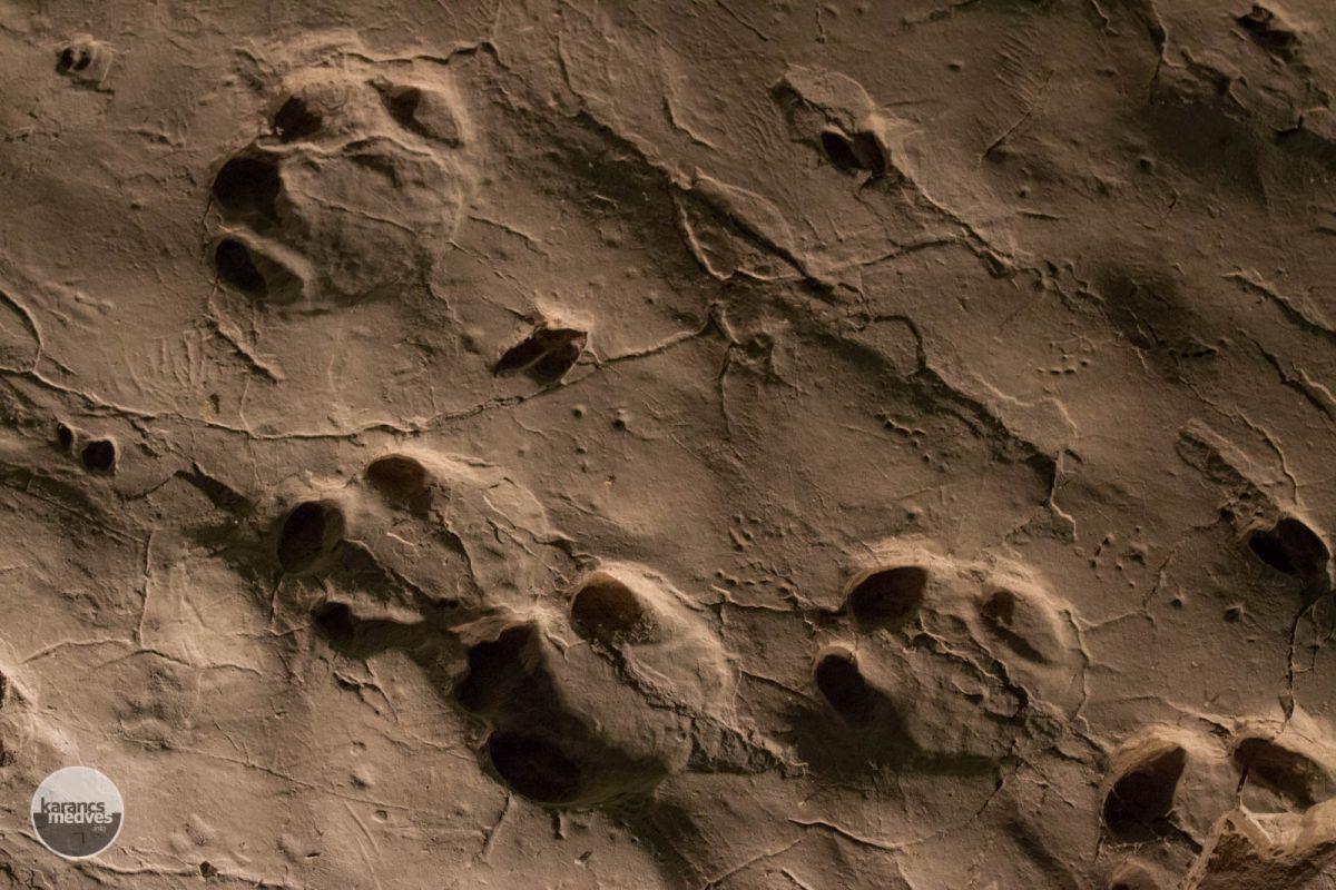Ősorrszarvú lábnyoma (karancs-medves.info fotó: Drexler Szilárd)