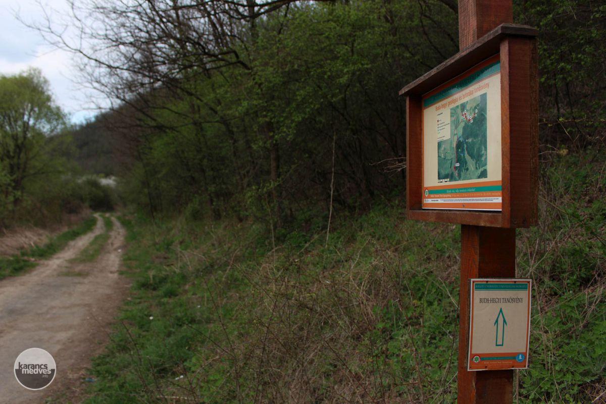 A Buda-hegy tanösvénye (karancs-medves.info fotó: Kéri István)