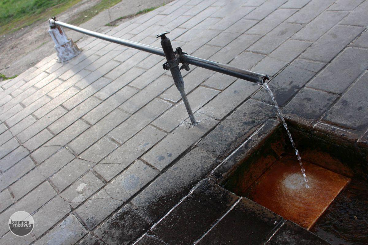 A sokak által kedvelt csevice (karancs-medves.info fotó: Kéri István)
