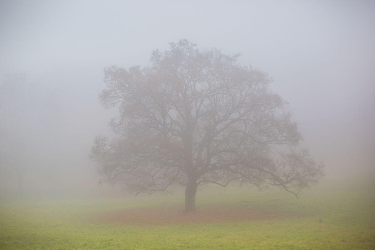 Kercseg-lapos ködös időben (karancs-medves.info fotó: Drexler Szilárd)