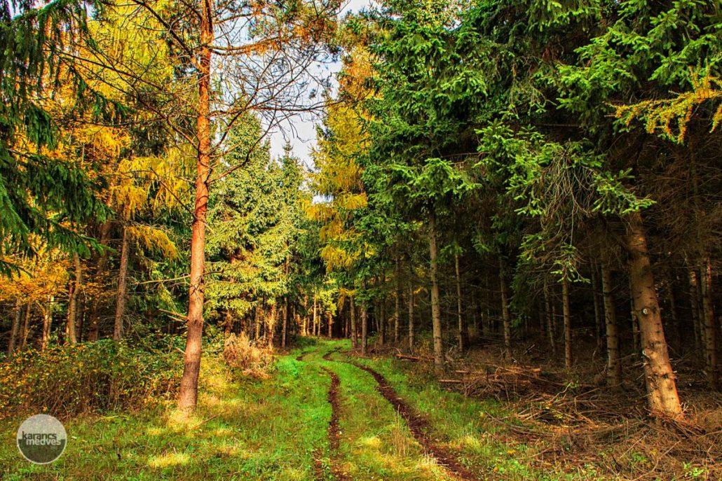 Kiemelt fotó: Medves-Magosa környéke(karancs-medves.info fotó: Micsuda András)