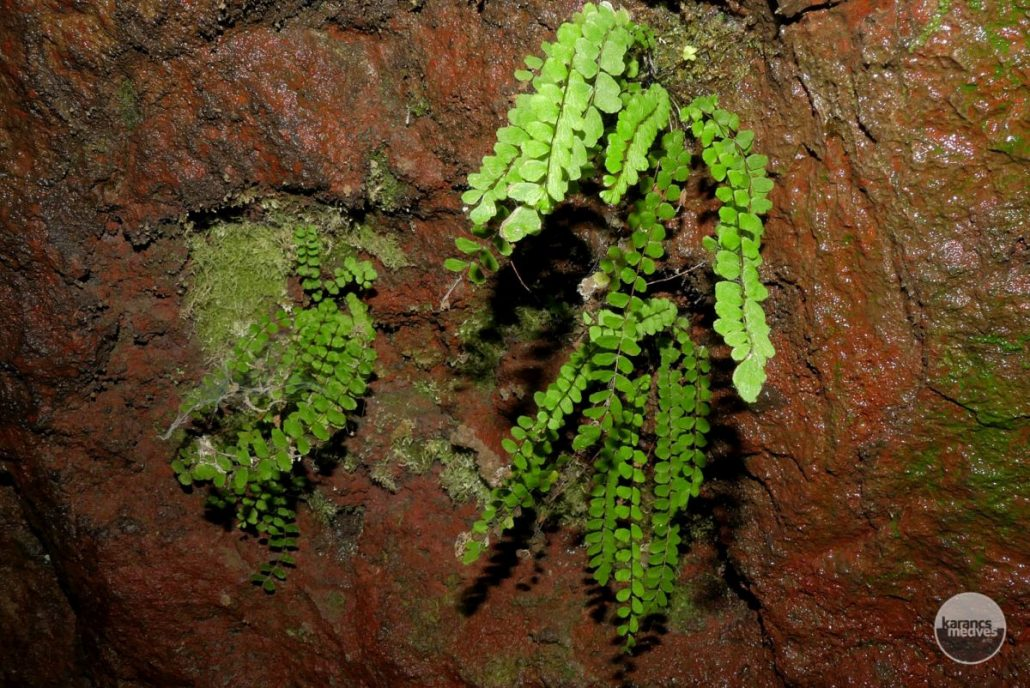 A szikla alatti kis barlang lakója (karancs-medves.info fotó: Kővári József)