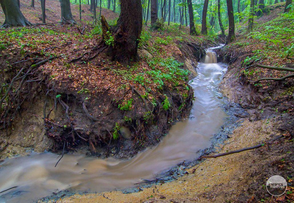 Az eresztvényi tansövény mellett folyik a Várberek-patak (karancs-medves.info fotó: Drexler Szilárd)