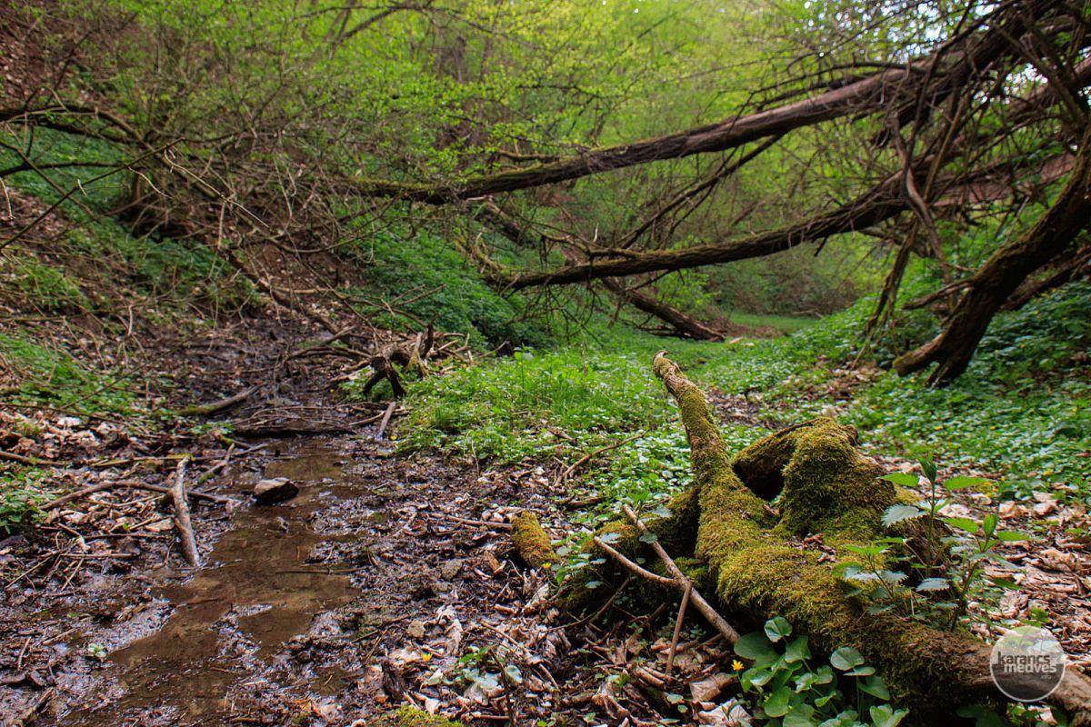 Kiemelt fotó: A Csontos-árok (karancs-medves.info fotó: Micsuda András)