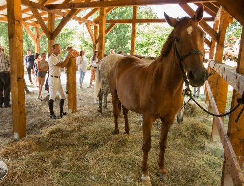 Egyedülálló lovas turisztikai hálózatot hoznak létre Nógrádban és további öt megyében